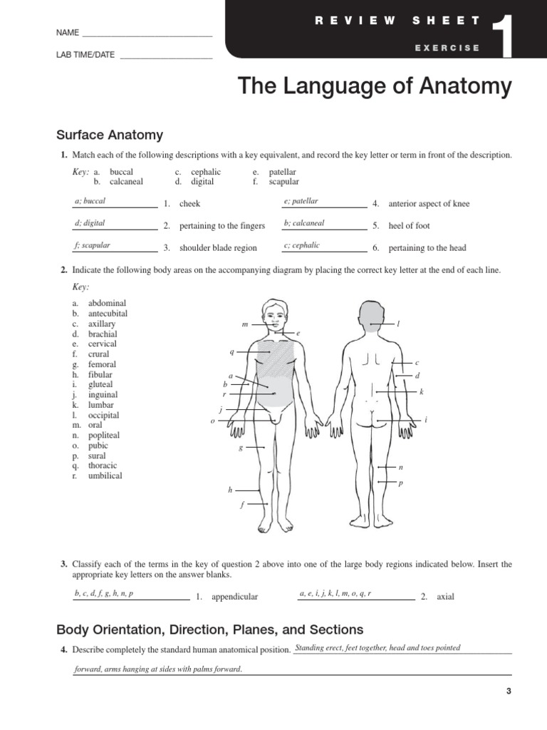 anatomy and physiology lab manual answers exercise 2